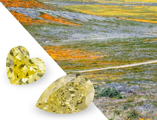 What Are Yellow Diamonds Are They Expensive Faq Leibish
